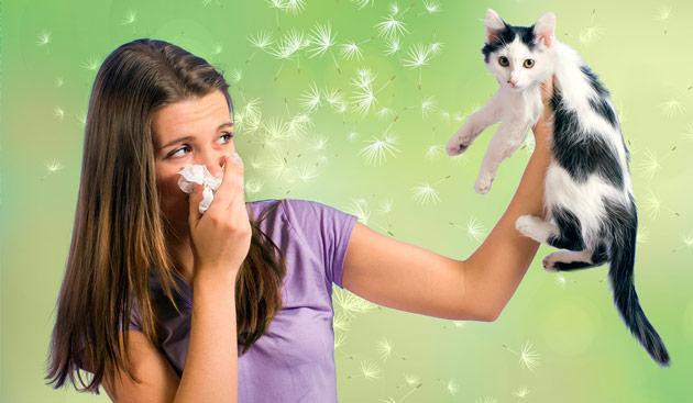 аллергия на пыльцу и животных